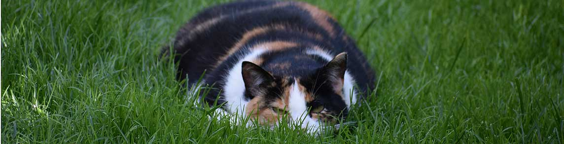 Kat weg